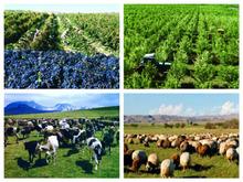 ՀՀ Գյուղատնտեսության նախարարությունն իրականացնում է գյուղատնտեսության ոլորտին տրամադրվող վարկերի տոկոսադրույքների սուբսիդավորման ծրագրեր
