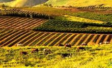 Մարզի գյուղատնտեսության ոլորտի իննամսյա ցուցանիշերը